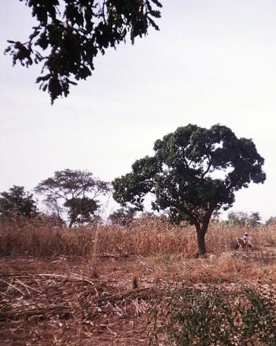 RECOLTES DE NOVEMBRE 2003 6.JPEG