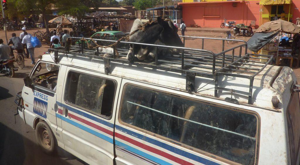 transporteur-zebu